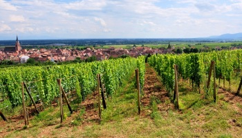 inspirations de la semaine un mariage alsacien - Domaine Viticole Mariage Alsace